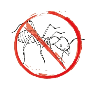 Hassle-free Natural Remedies for Controlling Ants