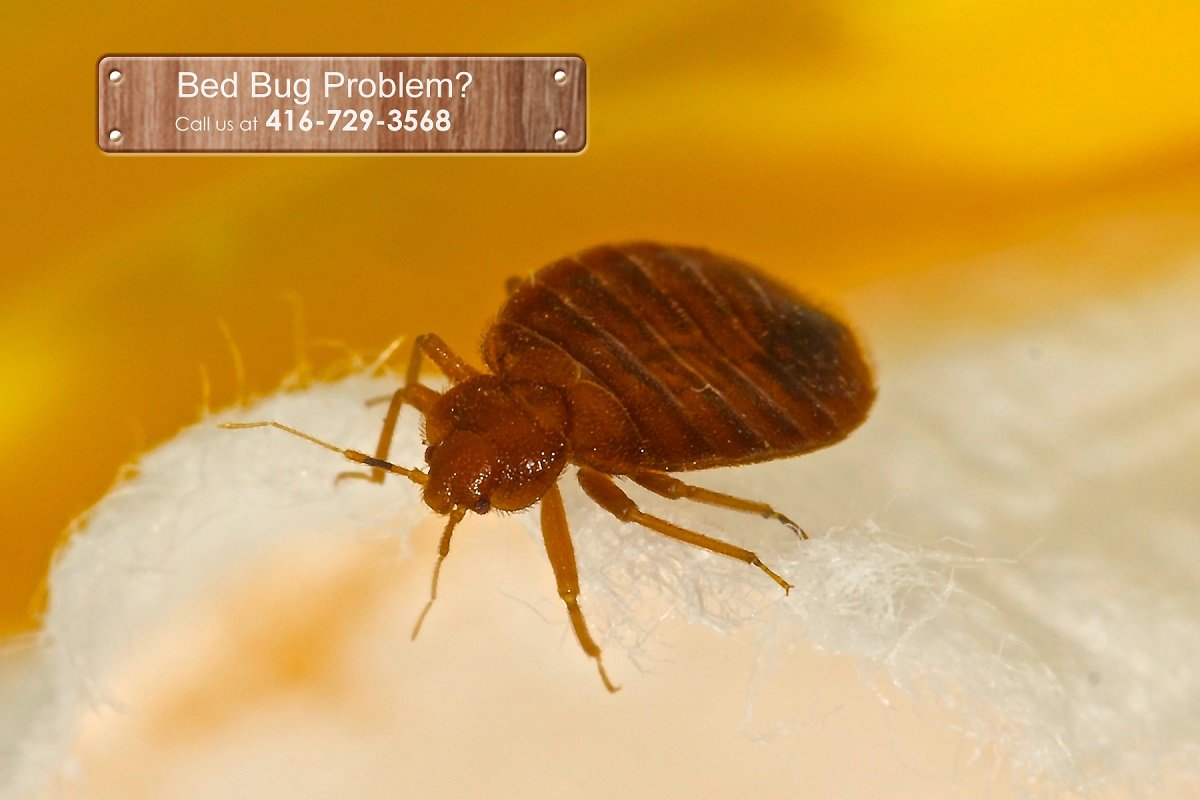 Pest-Control-Aurora
