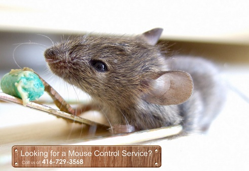 Mouse Control