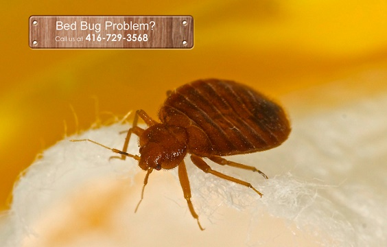 Pest Exterminating and Control Services