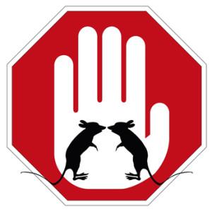 Practical Rat Prevention Tips