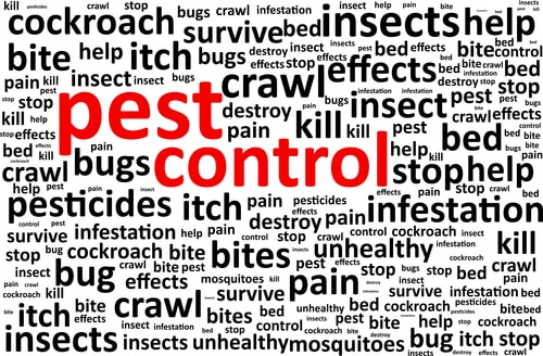 Tips on Choosing a Pest Control Service in Ontario