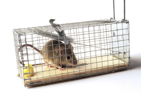 4 Humane Ways to Trap Mice
