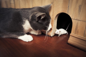 Say Goodbye to Mice – Simple Mouse Control Tips for your Home