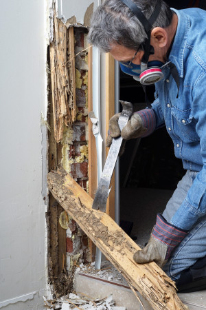 JDM Pest Control is the Worst Enemy of the Termite!