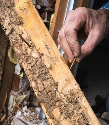 How to Stop Termites before they eat your Home while you sleep