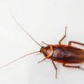 Important Facts You Need To Know About the Types of Roaches