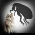 Must have Information about Fleas, your health and how to get rid of them!