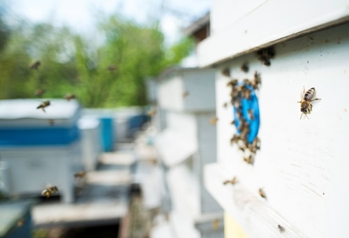 How To Hire A Professional Bee Control Service