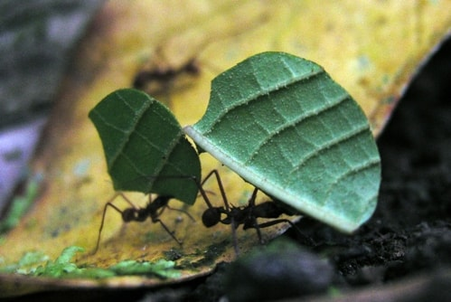Tiny Titans: 15 Fascinating Facts about Ants