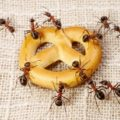 Ant ABCs and Purging These Pests