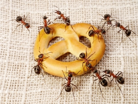 Tips For Winter Ant Removal