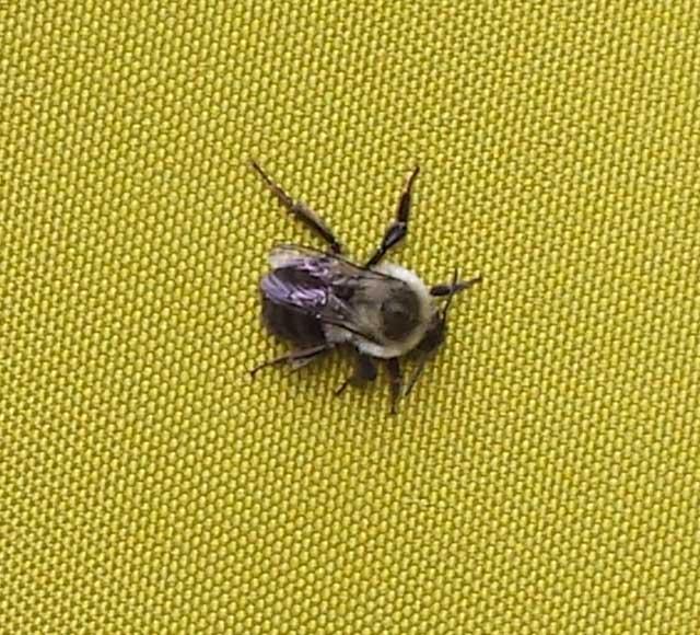 wasps-hornets-jdm-landscape