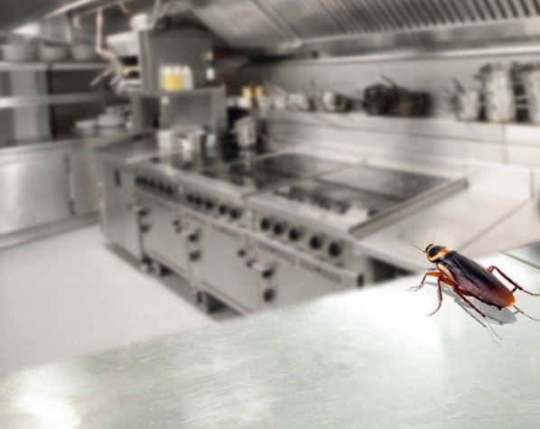 Food Safety: The Importance of Pest Control