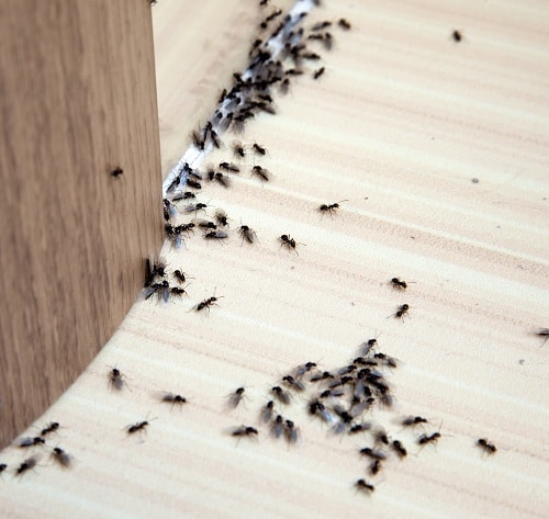 Common Places Where Ants Hide in Your Home