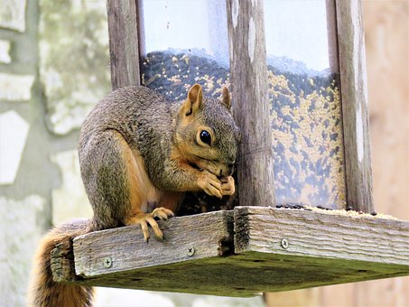 Preventing Squirrel Damage in Your Home