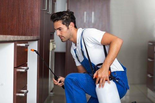"Why Pest Control Isn't a ""DIY"" Job"