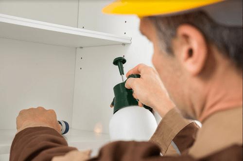 "Why Pest Control Isn't a ""DIY"" Job2"