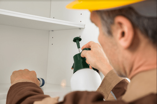 "Why Pest Control Isn't a ""DIY"" Job2"