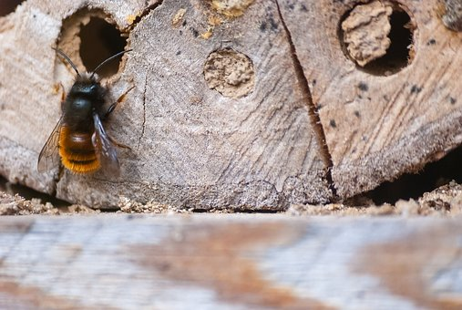 Common Springtime Household Pests