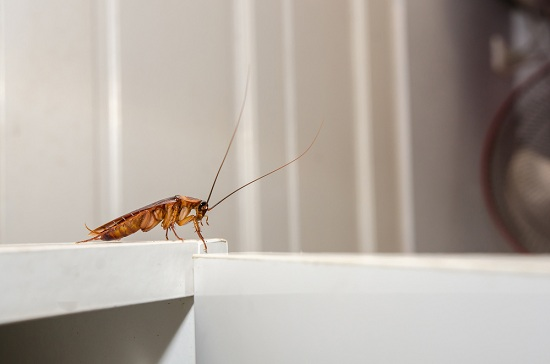 cockroach inside house