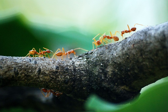 facts about ants