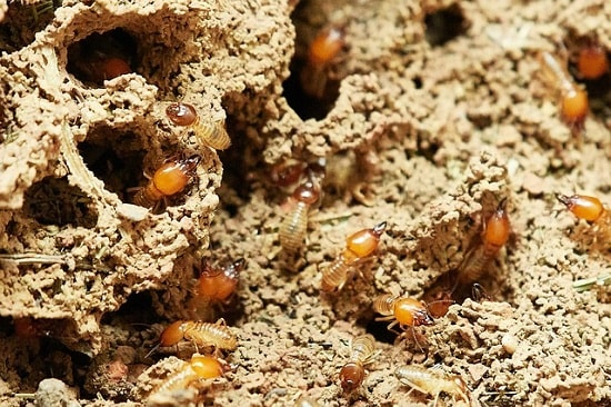 pests in your home