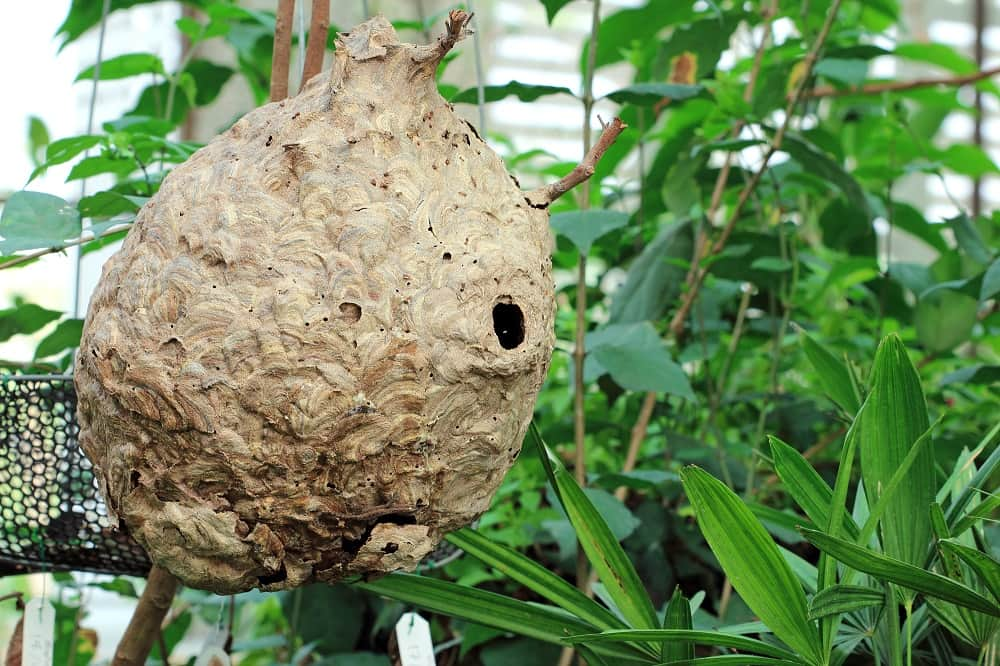 How to Combat Home and Garden Wasps