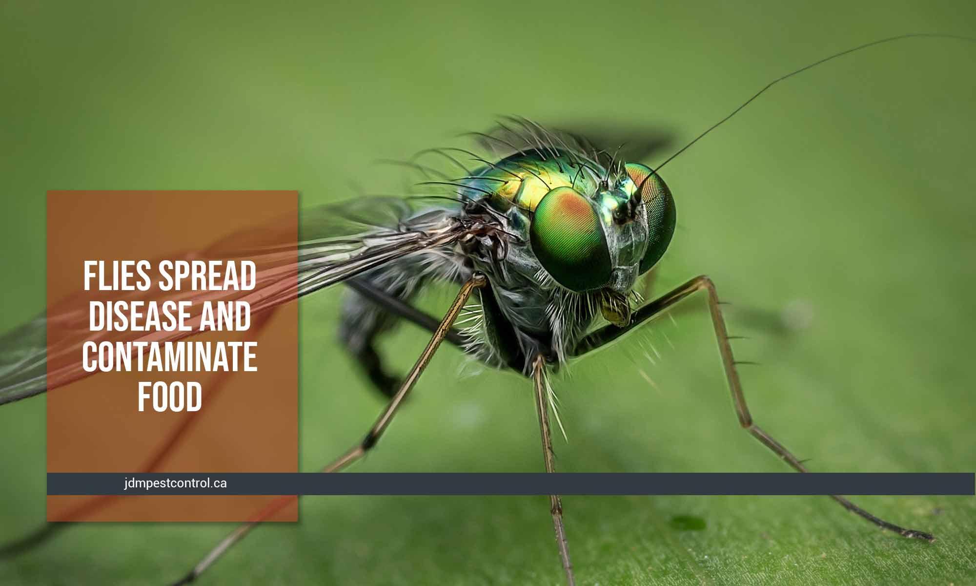 flies spread disease