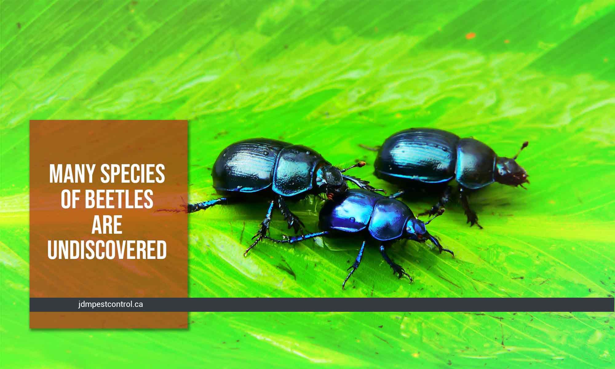 undiscovered species of beetles