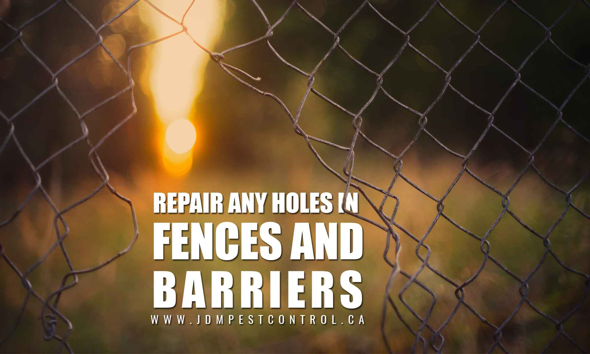 repair any holes