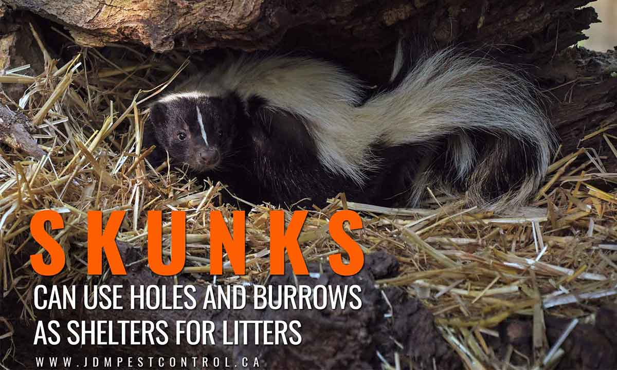 skunks can use holes