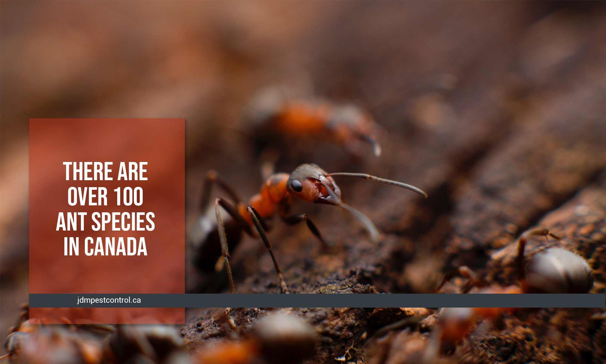 100 ant species