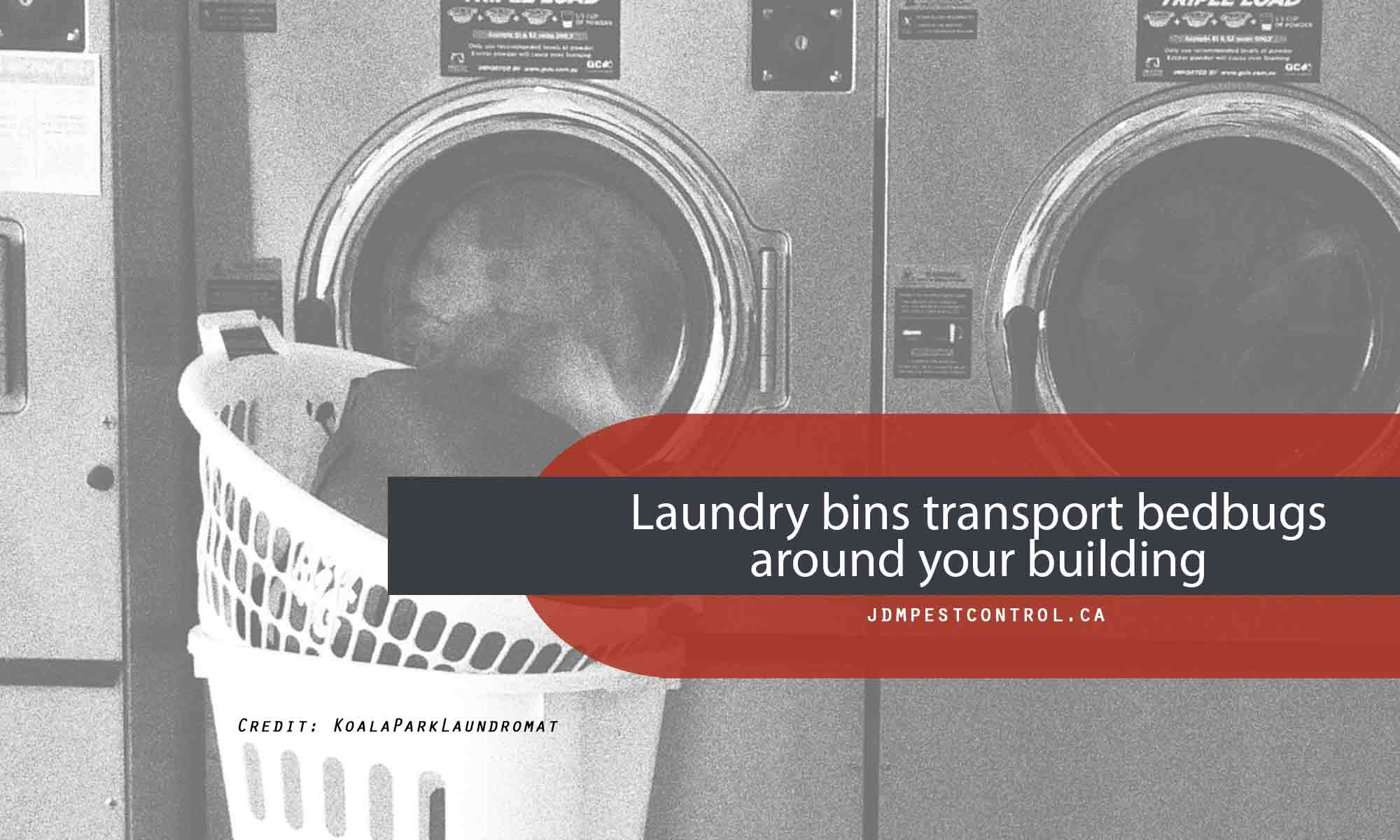 Laundry bins transport bedbugs around your building