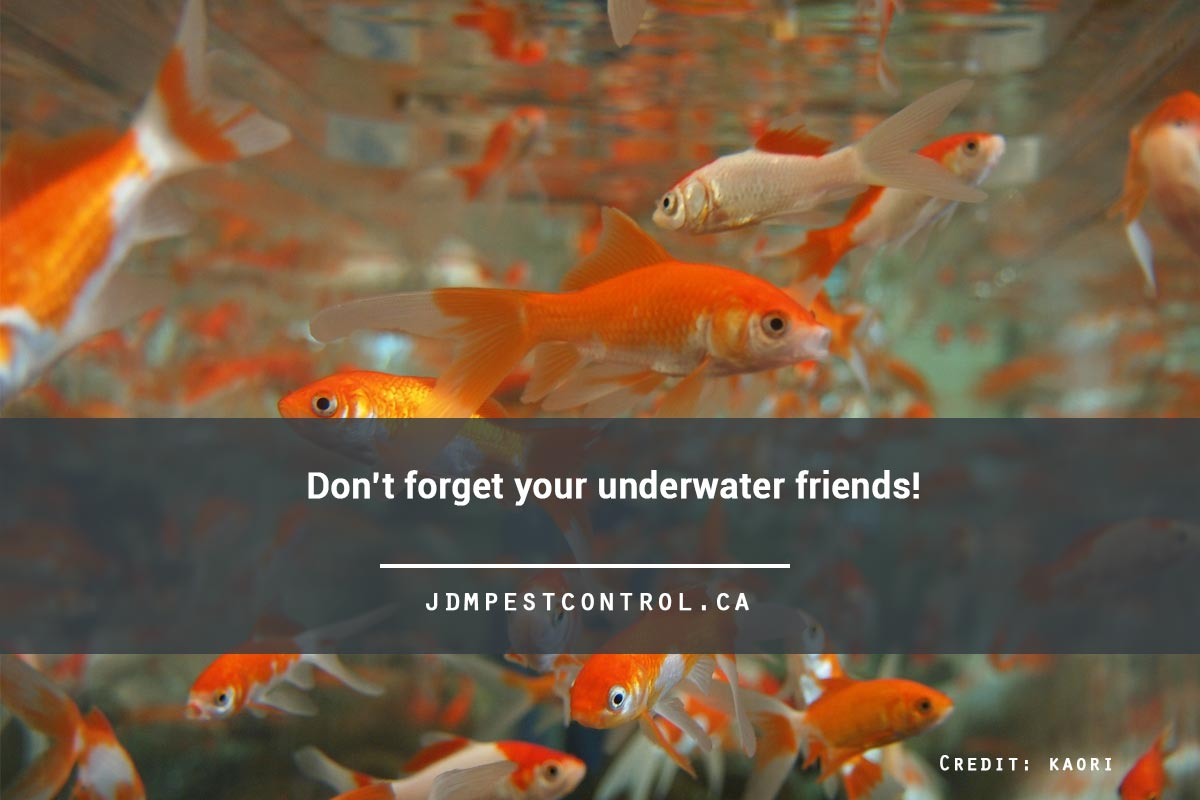 Don't forget your underwater friends!
