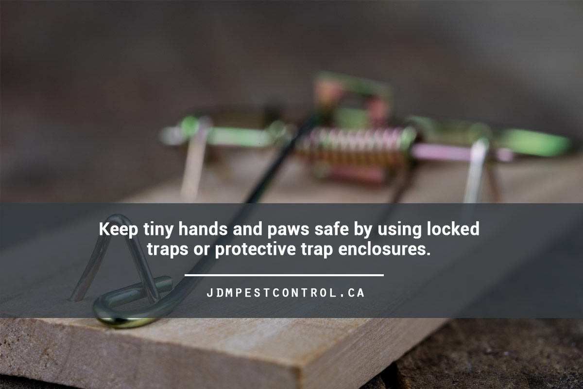 Keep tiny hands and paws safe by using locked traps or protective trap enclosures.