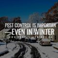 Pest control is important—even in winter