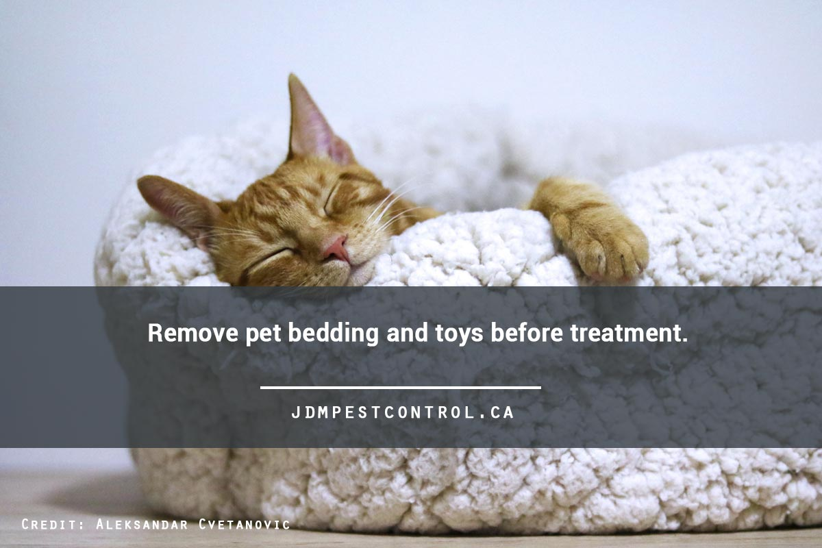 Remove pet bedding and toys before treatment.