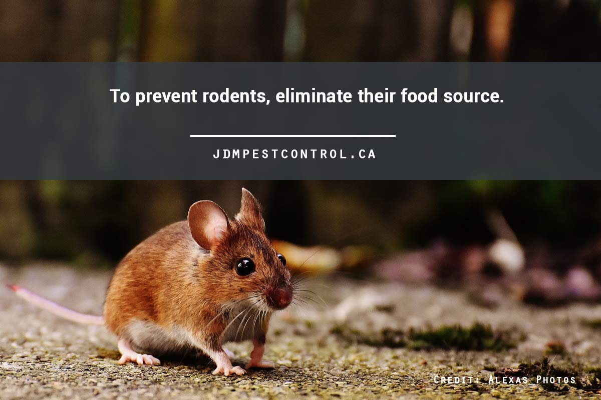 To prevent rodents, eliminate their food source.