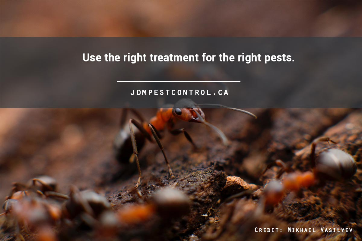 Use the right treatment for the right pests.