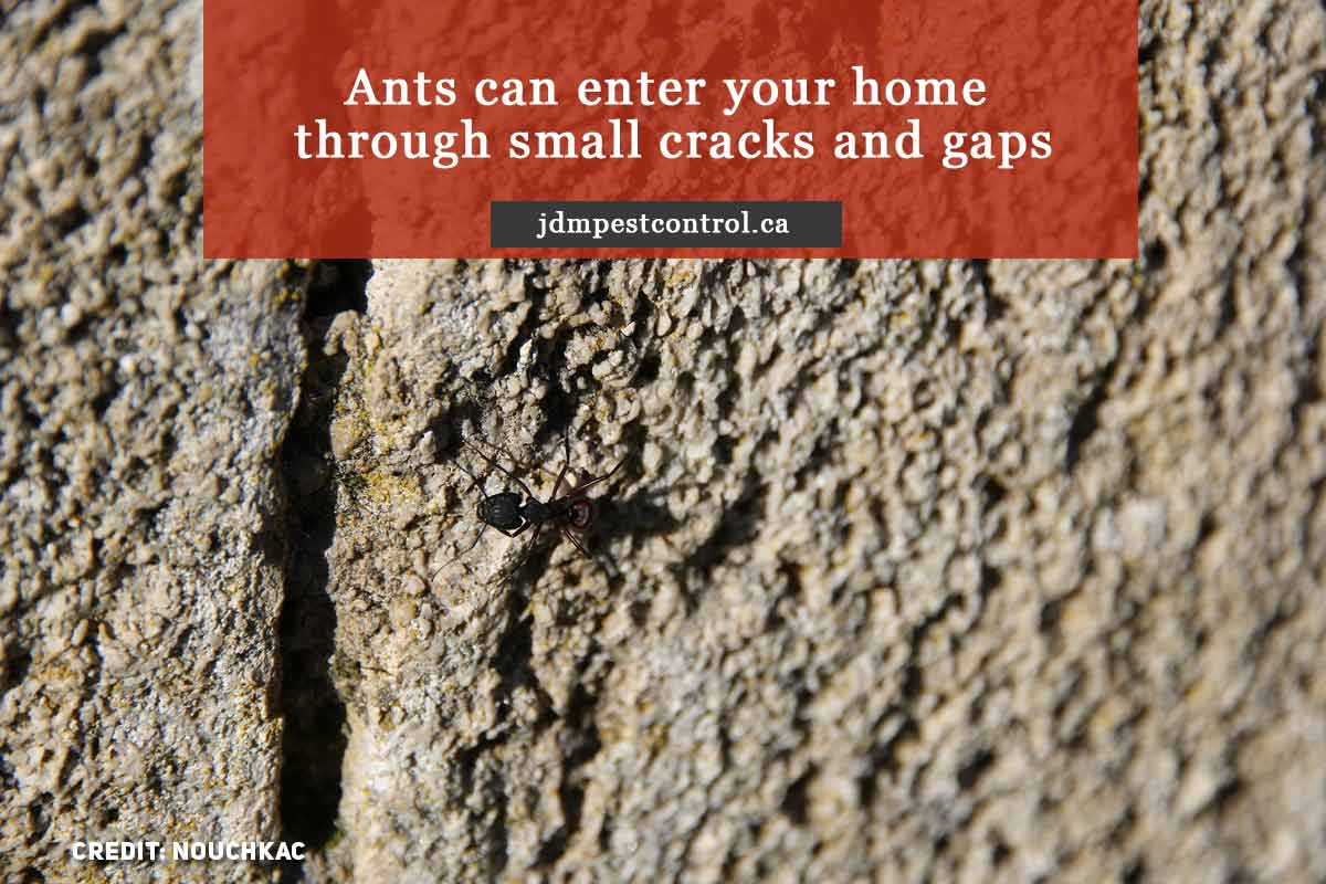 Ants can enter your home through small cracks and gaps