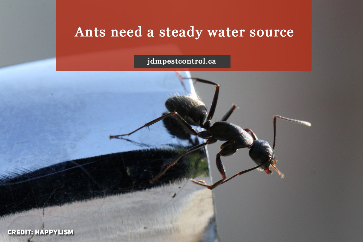 Ants need a steady water source