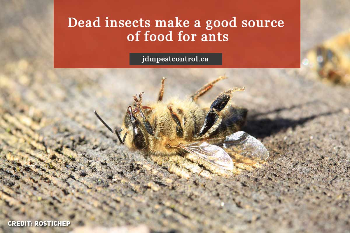 Dead insects make a good source of food for ants