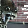 Prevent raccoons from invading your home