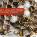 Why DIY Wasp Nest Removal is a Risky Business
