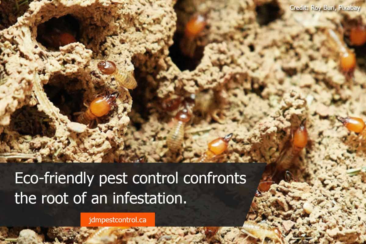 Eco-friendly pest control won't damage your landscaping