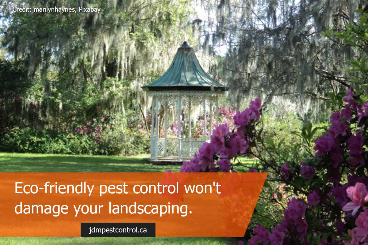 Eco-friendly pest control confronts the root of an infestation.