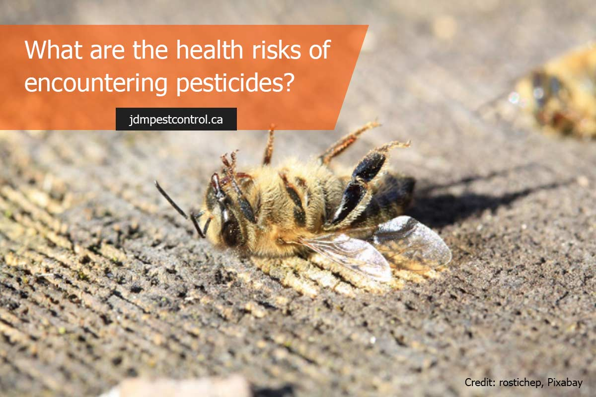 What are the health risks of encountering pesticides?