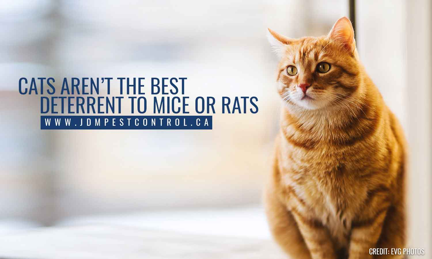 Cats aren't the best deterrent to mice or rats