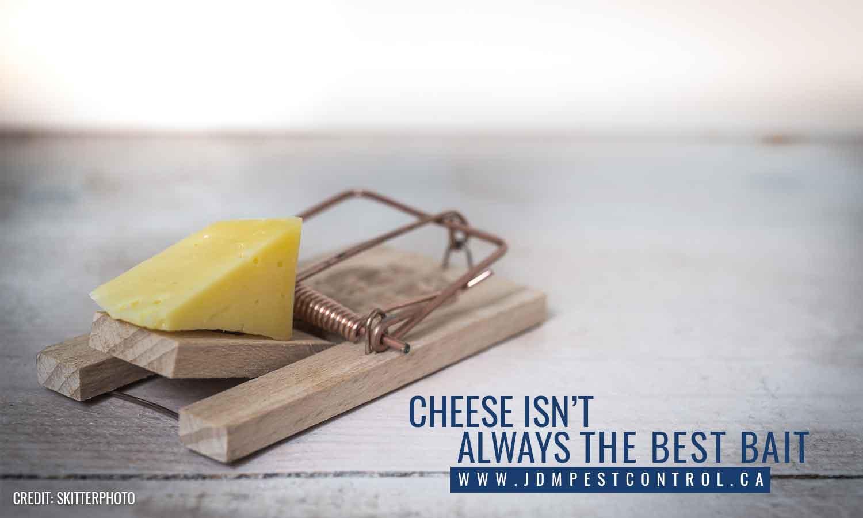 Cheese isn't always the best bait